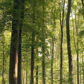 Wood saw steel-